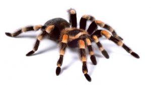 Spider Google motori di ricerca